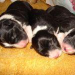17.5.2015 - tři bratři